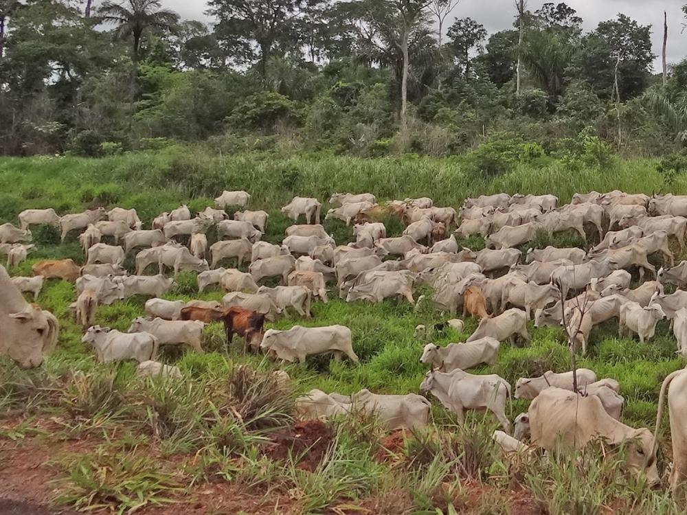 Caso registrado em Mato Grosso é atípico e não coloca qualidade da carne em risco