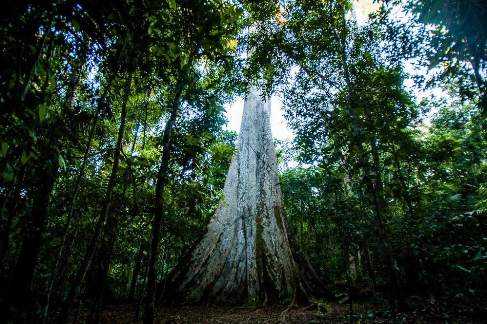 Mato Grosso tem queda no desmatamento pelo quarto mês consecutivo