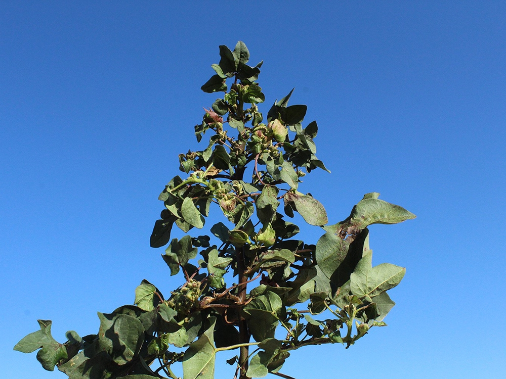 Vermes de solo acende o sinal de alerta em Mato Grosso
