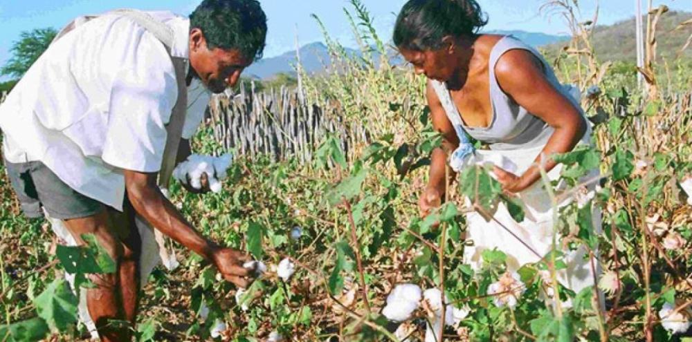 Cultura do algodão faz parte dos debates do 4º Congresso Nacional das Mulheres do Agro