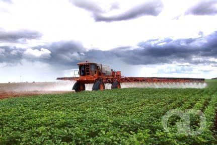 Mato Grosso aumenta em 2% a área plantada de grãos.
