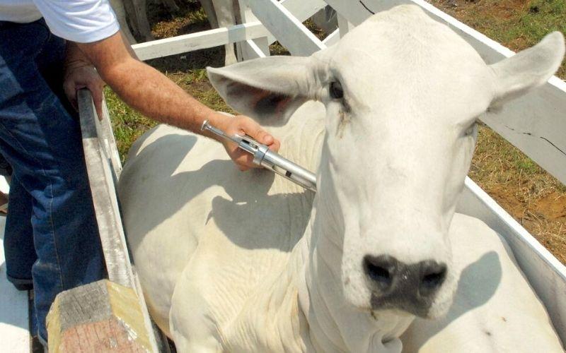 Carlos Cesar Floriano: vacinação em dia contra febre aftosa