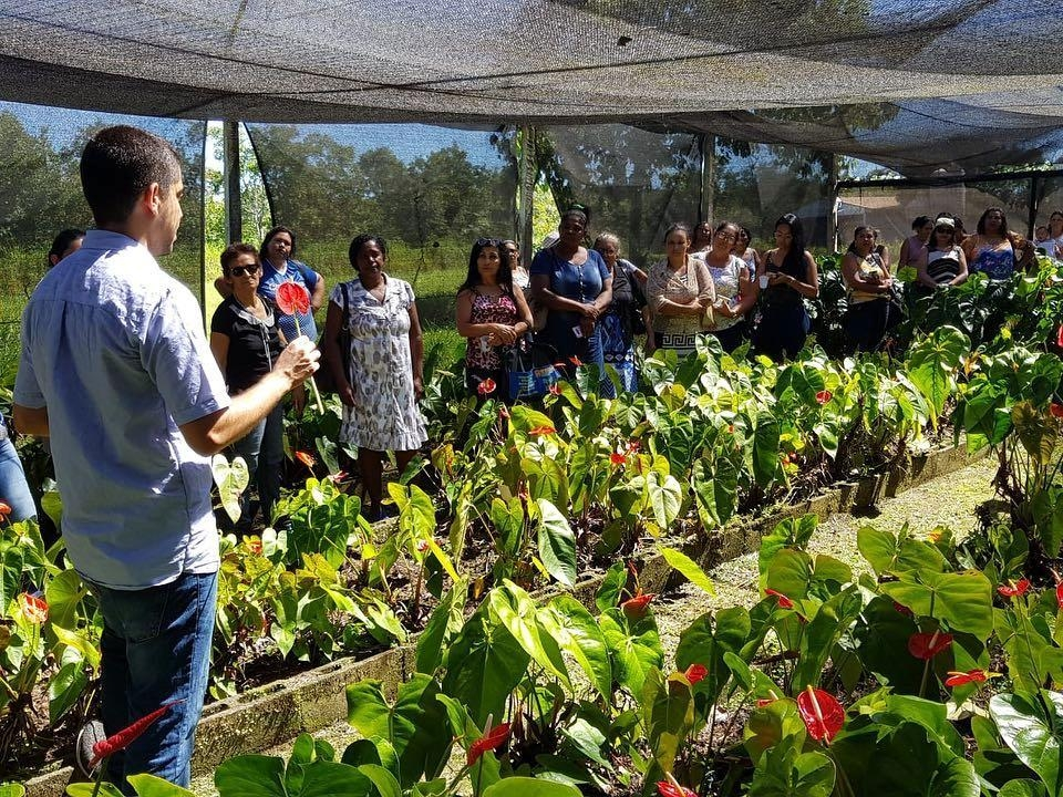 Condições ideais de solo e clima atraem pequenos produtores para o cultivo de flores tropicais em MT