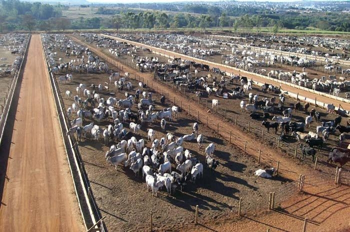 Mato Grosso deve confinar quase 600 mil  cabeças de gado em 2020