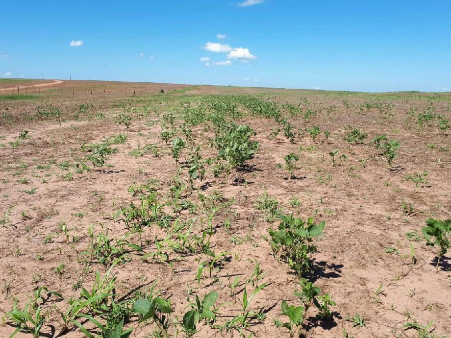 Vazio sanitário da soja começa na segunda-feira (15) em Mato Grosso