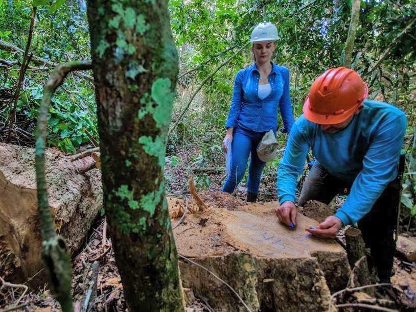 Produtores florestais brigam pelo direito de trabalhar legalmente