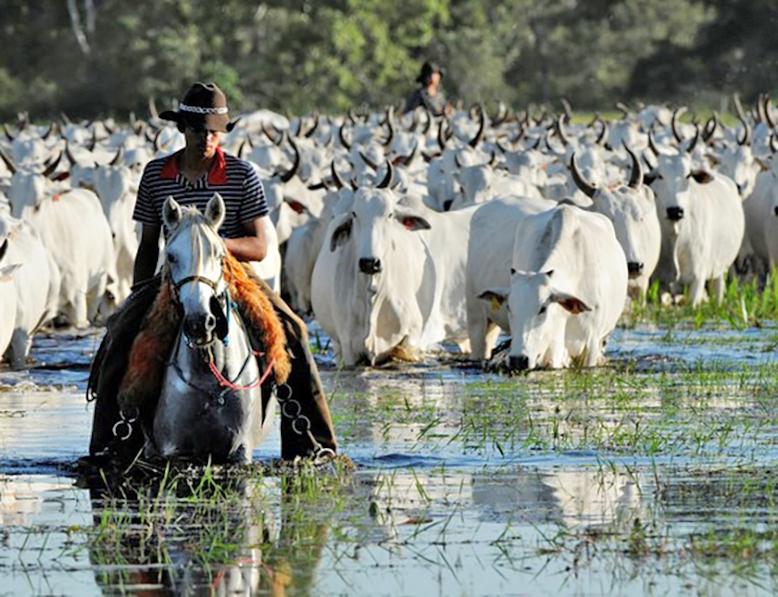 Acrimat destaca papel da pecuária na economia brasileira