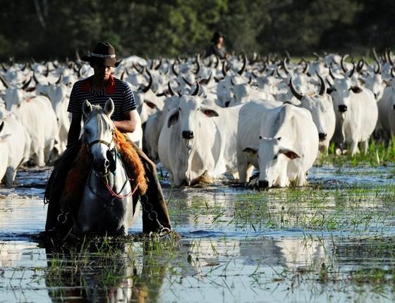 Pecuária alia produtividade à preservação do meio ambiente