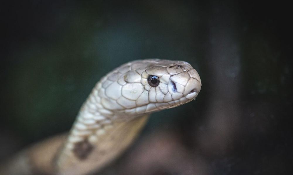 PF faz operação contra tráfico internacional de animais no Amapá