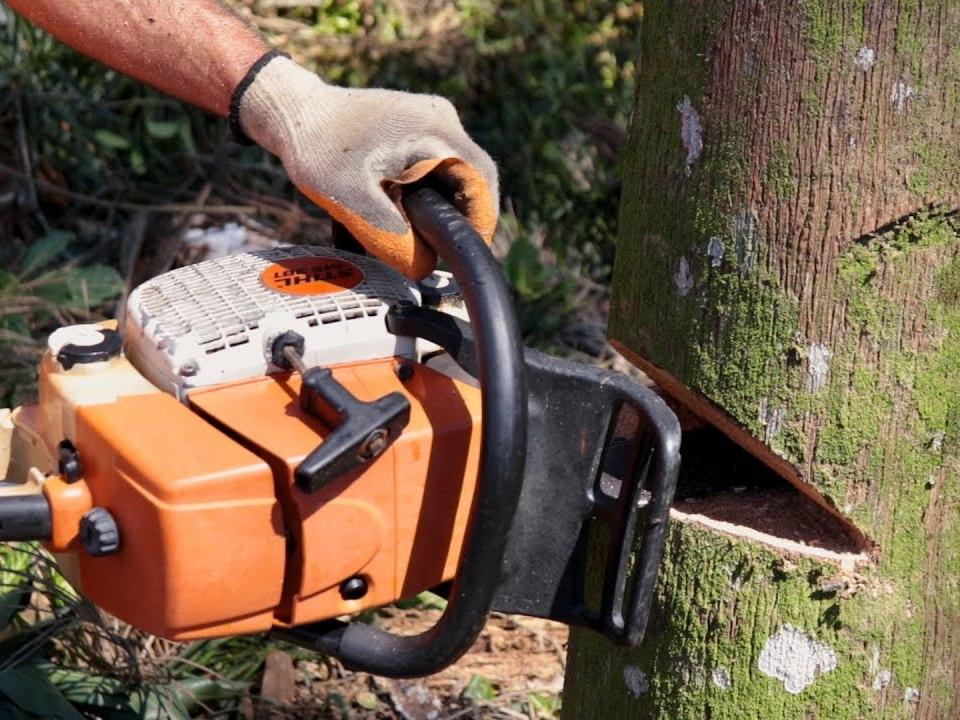 Em Juara trabalhador derruba árvore com motosserra e morre atingido por galhos.